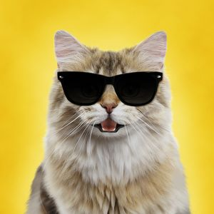 Cute cat smiling and laughing wearing sun glasses and yellow