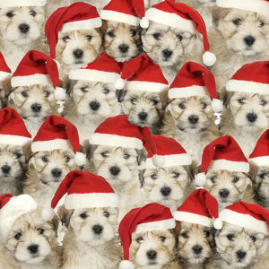 Cute Dogs wearing Christmas hats
