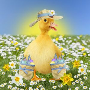 Cute ducking in spring flowers wearing an Easter bonnet hat