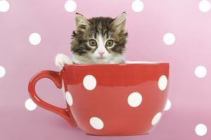 Cute kitten sitting in a red polka dot teacup pink background