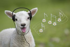 Cute spring lamb singing wearing headlines with daisy music