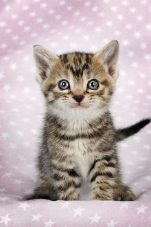 Cute Tabby Kitten smiling, wide eyes & spotted pink background