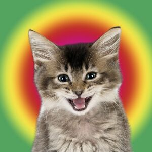 CuteTabby kitten cat smiling with a psychedelic background