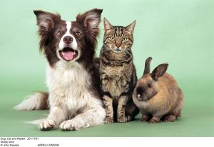 Dog - with Cat and Rabbit