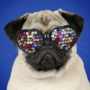 <b>Pugs</b><br>Selection of 74 items