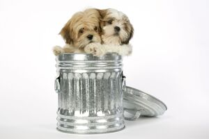 DOG - Lhasa Apso & Shih Tzu puppies in a dustbin