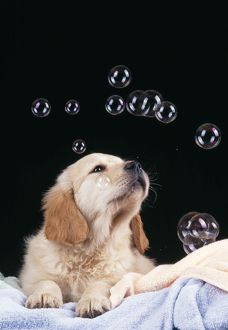 DOG - Puppy with bubbles