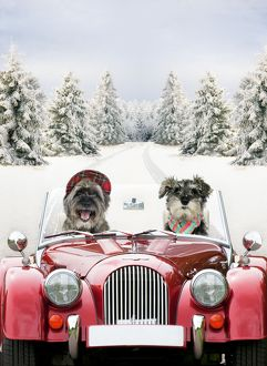 Dogs - driving car through a snow scene