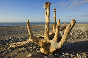 Driftwood - by the power of water beautifully sculpted driftwood washed ashore at