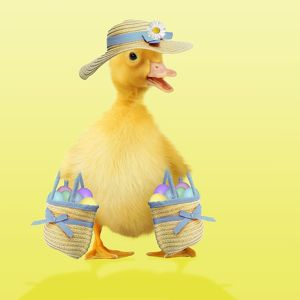 Duckling - in hat carrying Easter eggs