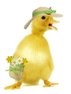 Duckling - wearing straw hat & carrying bag with daffodils