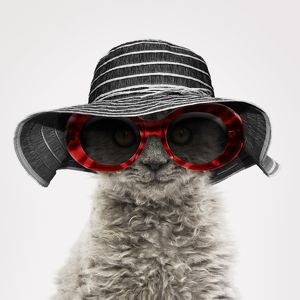 Elegant Selkirk Rex cat wearing a striped hat and sunglasses