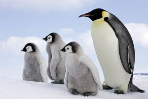<b>Penguins</b><br>Selection of 77 items