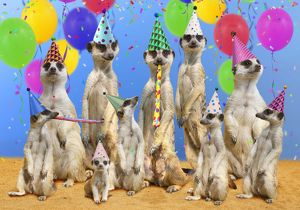 Family of Meerkats having a birthday party with hats & balloons