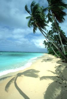 FIJI - Taveuni Island, Beach, Coconut Palms & Shadow