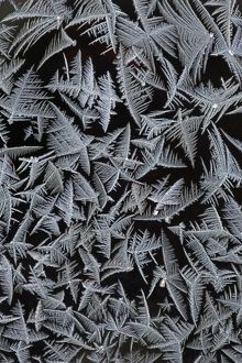 Frost Crystals - On car windscreen