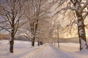 Frosty Winter Scene - deep snow covered winter landscape showing a plowed country road flanked by trees covered with frost