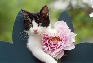 FRR-271 CAT - Cute kitten with pink flower