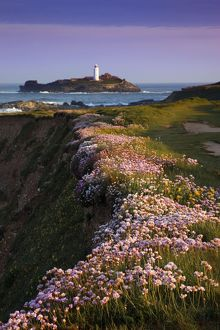 Godrevy - thrift in flower