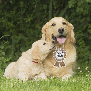 Golden Retriever dog with puppy with No.1 Dad sign