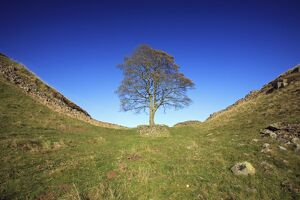 Hadrian's Wall - Sycamore Gap, beside Steel Rig, autumn