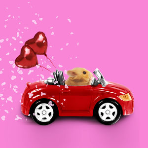 Hamster driving miniature red sports convertible