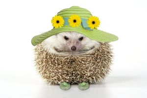 Hedgehog - in hat and shoes - Easter