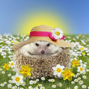 Hedgehog in spring flowers wearing an Easter bonnet