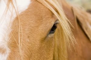 Horse - detail of head showing eye