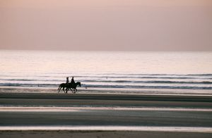 Horse - Horseback riding on beach by sunset