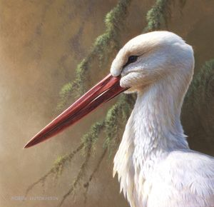 Illustration European White Stork