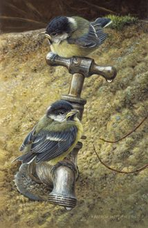 Illustration Great Tit juveniles