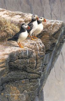 Illustration Puffins on cliff edge
