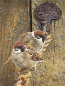 Illustration Tree Sparrows