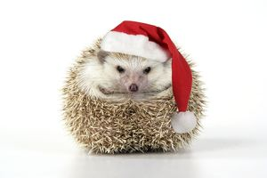 JD-20232-M3 Hedgehog - wearing Christmas hat
