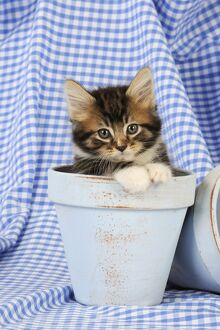 JD-20663 Cat. Kitten in plant pots