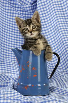 JD-20667 Cat. Kitten in jug