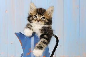 JD-20685 Cat - Kitten in blue jug