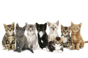 JD-20842-M Cat - kittens line-up