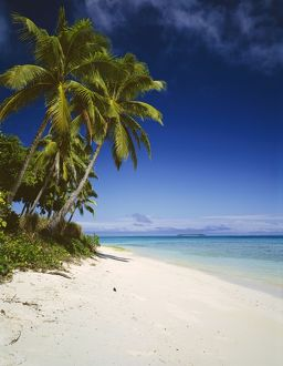 landscapes/jlr 332 ovalau island tropical beach scene palm