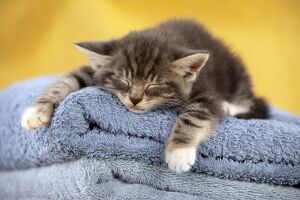 Kitten - sleeping on towels