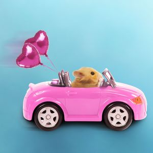 LA-3728-M Hamster driving miniature sports convertible car with heart shaped balloons
