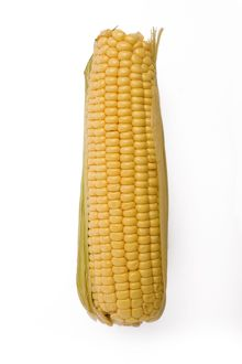 LA-4799 Sweetcorn - corn on the cob