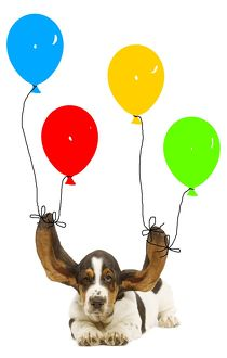 LA-5819 Dog - Bassett hound puppy with ears being held up by balloons