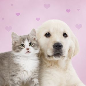 LA-6894-M-C Dog - Golden retriever puppy with kitten with pink hearts