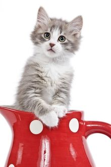 LA-7236 Cat - kitten in red jug