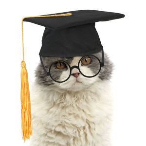 Long-haired Selkirk Rex Cat, wearing glasses