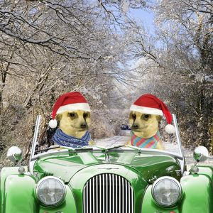 Meerkats - driving car through snow scene wearing Christmas hats