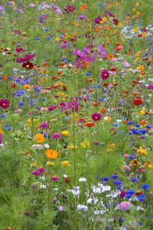 Mixed flowers in meadow