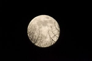 Full Moon - Rising over a forest